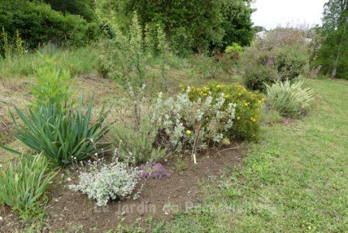 photo d'un massif mediterranéen fleuri en juin au Jardin de Rochevieille